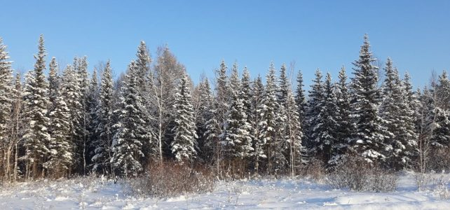 «Зимушка – зима»