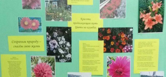 В ОУ прошла фотовыставка цветов «Цветочная феерия»
